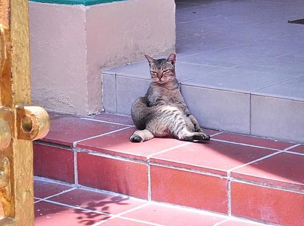 140807新加坡貴妃貓