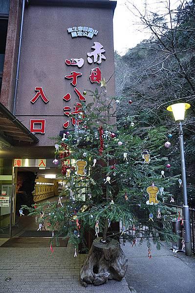 入口處有一棵聖誕樹以可愛版大山椒魚來點綴