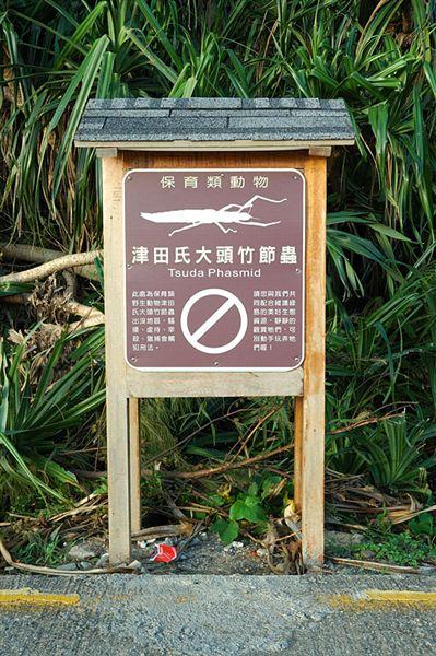 關於津田氏大頭竹節蟲的告示牌