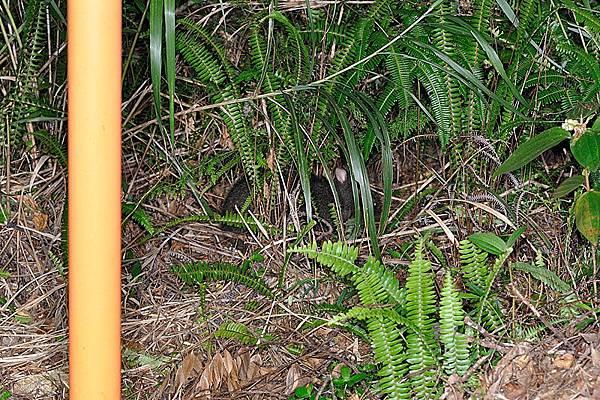 躲到那叢草後面了...