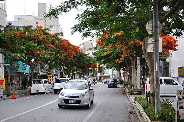 滿街都是鳳凰花