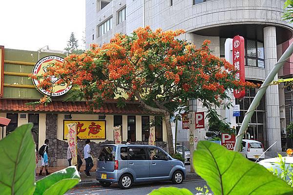 路邊盛開的鳳凰花