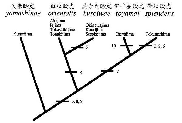黑岩氏瞼虎的系統分類