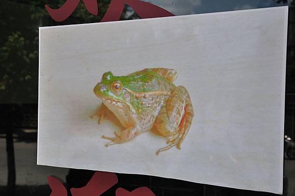 黑斑側褶蛙(Pelophylax nigromaculatus)