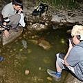野外大山椒魚2.jpg