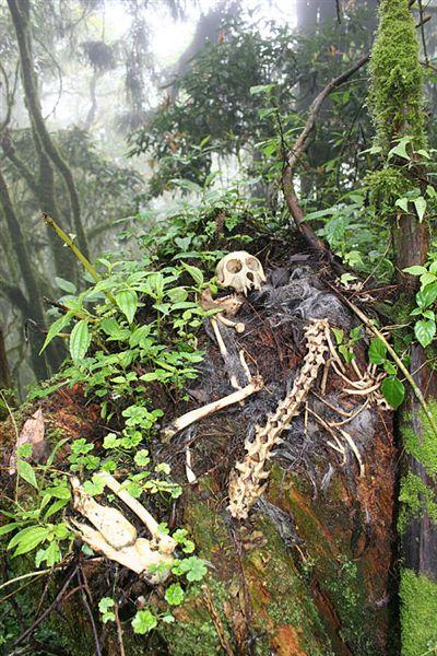 發現獼猴的屍骸了!!