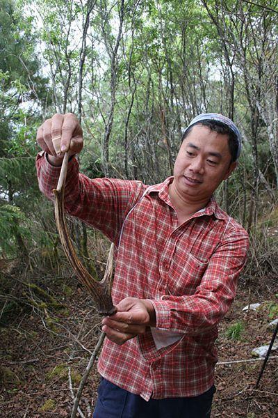 另一位林務局大哥阿信撿到第一根水鹿角了!!