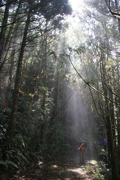 漂亮的森林