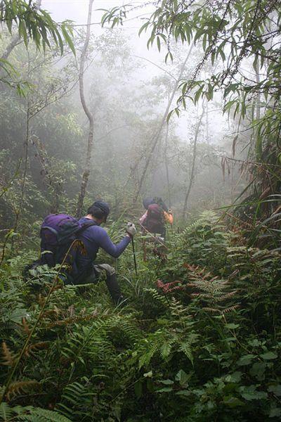 穿過叢林...
