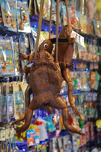用海蟾蜍(大蟇,Bufo marinus)做成的皮包~