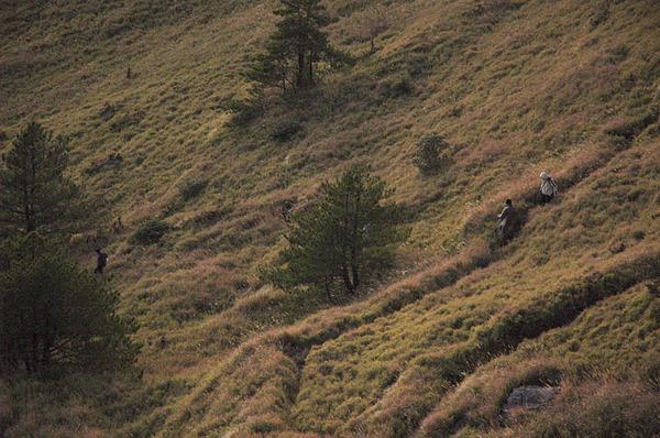在草原裡走動
