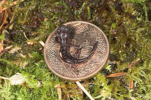 和壹圓硬幣的合照