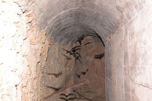 關山的碉堡中