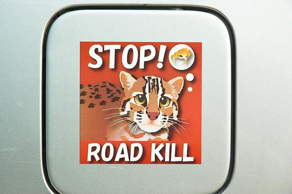 STOP! ROAD KILL