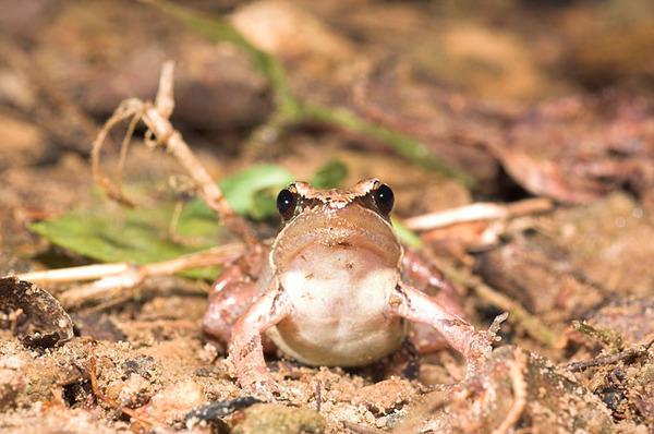 嘗試跟豎琴蛙一樣高的水平下拍攝