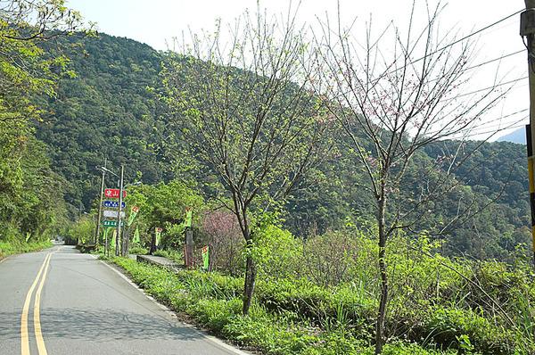 路邊的樹木