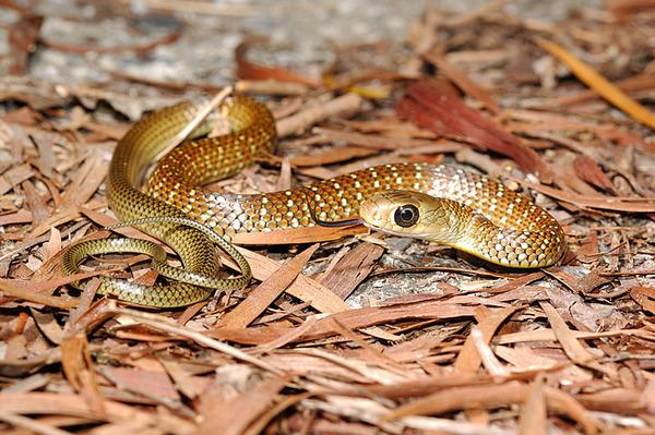 是一條很可愛的幼蛇