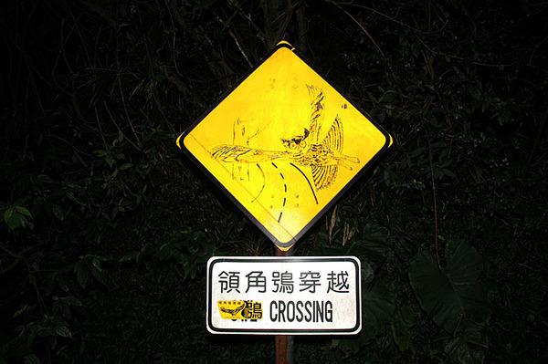 領角鴞穿越注意!!!