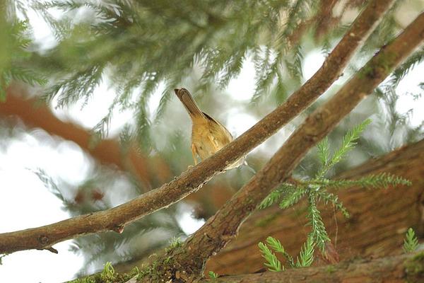 有隻在枝頭忙碌的鳥...