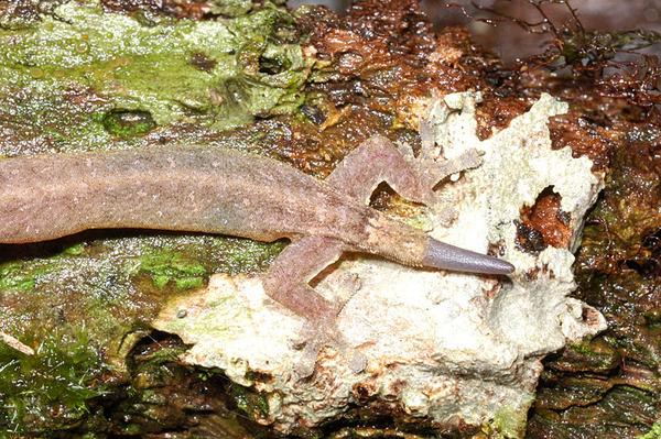 尾巴和身體的顏色明顯不同