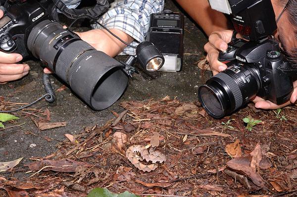 拍攝百步蛇現場