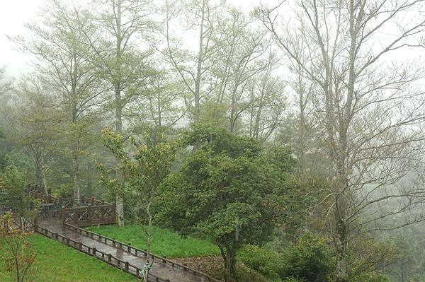 觀霧管理站附近的風景