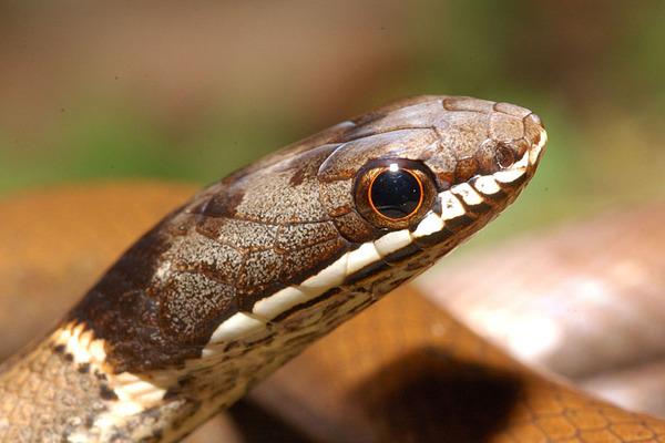 我開始看蛇以來的第一條活蛇