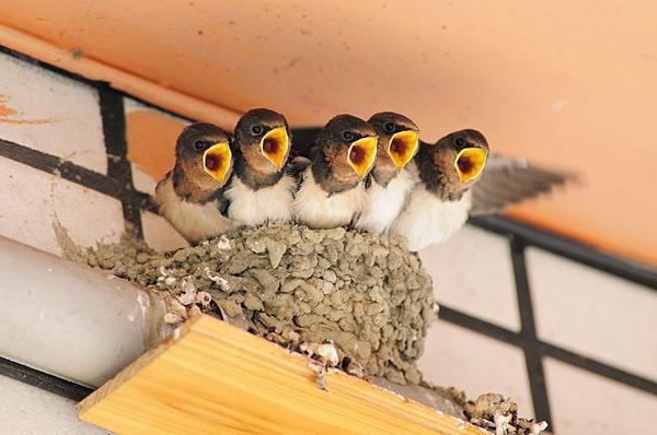 餐廳門口上面的燕巢