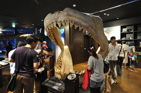 古代鯊魚的骨頭...