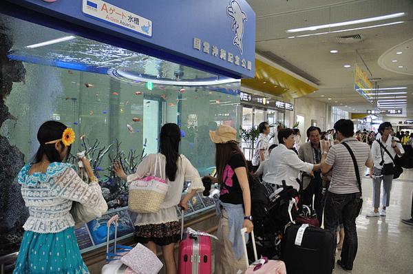 沖繩美之海水族館設在機場出口的水族箱~