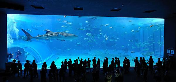 全世界最大的一缸水族箱!!