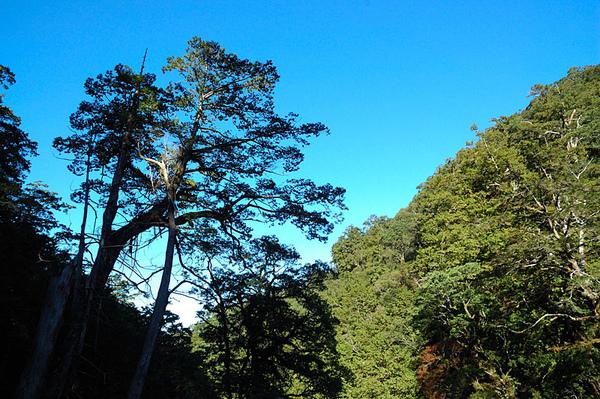 大樹與藍天