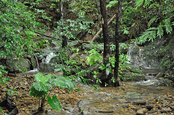 琉球棘螈棲息的環境