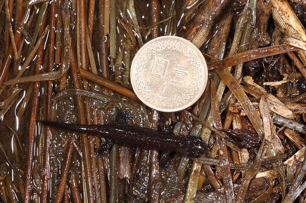 和一元硬幣的合照