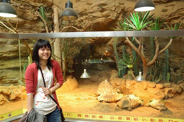 愷愷和蘇卡達象龜