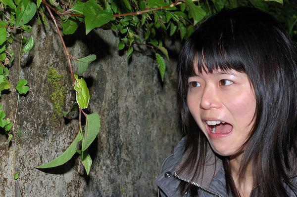 愷愷發現翡翠樹蛙了!