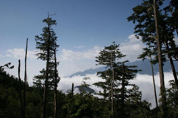 高大的樹木