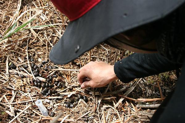 阿信正在採樣水陸排遺