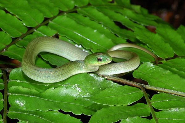 非常可愛的小青蛇