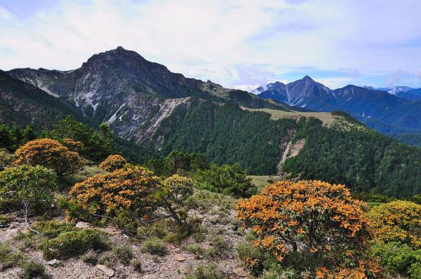 南湖大山和中央尖山以及南湖杜鵑...