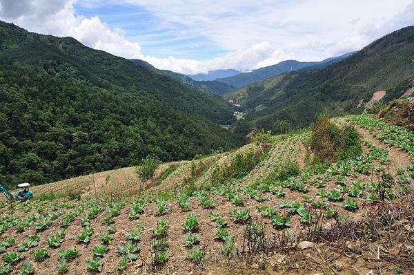 往山下拍高麗菜田