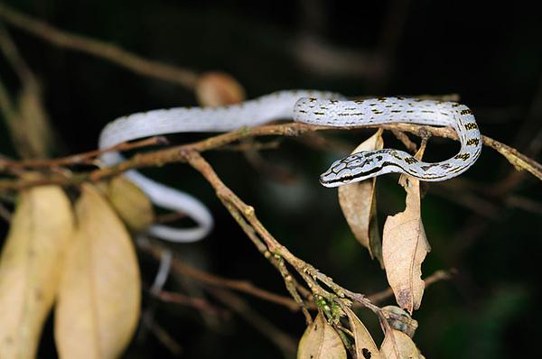 好美的蛇!