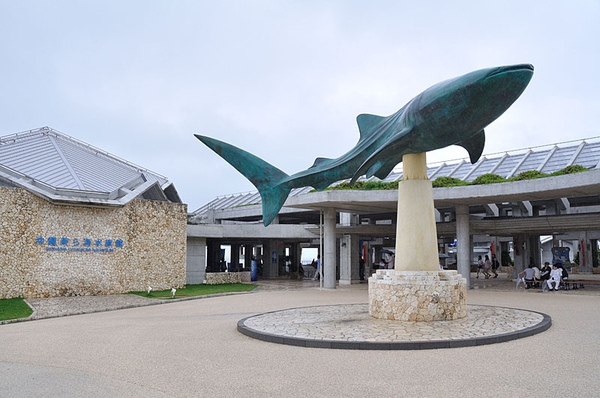水族館外的鯨鯊