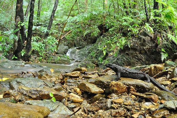 琉球棘螈帶景照