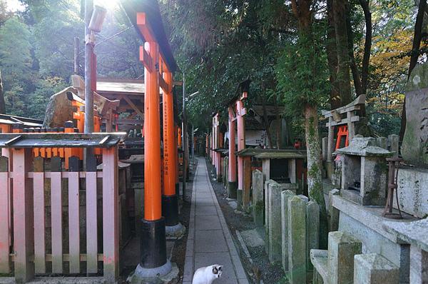 這條小路走過去的兩側有很多像是縮小版的神社