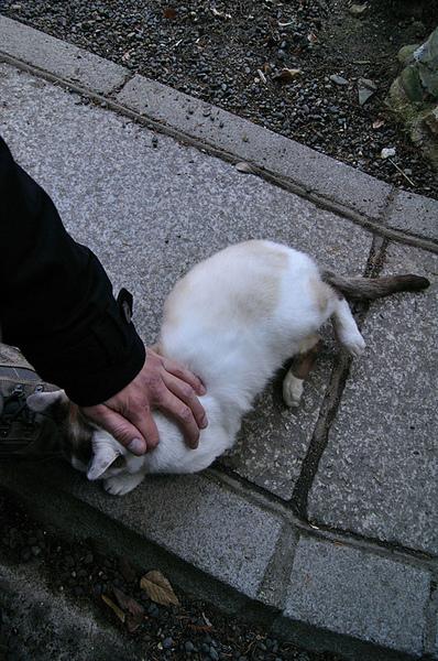 我只伸手摸了兩下牠就腿軟躺下了XD