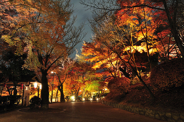 往出口的走道兩側都是打光的林木
