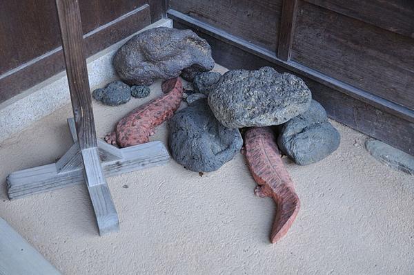 在門口發現大山椒魚!!