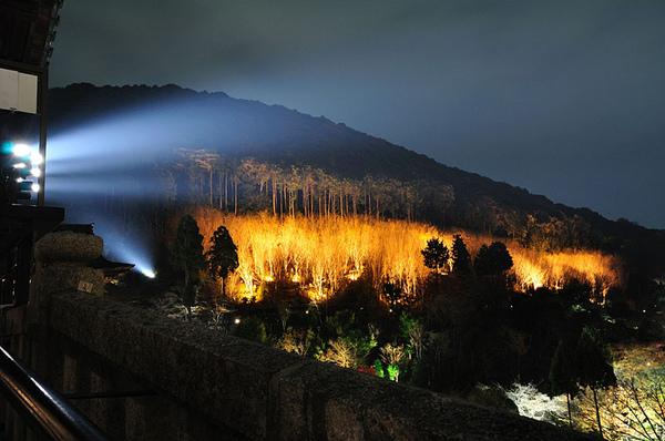 從普門閣旁邊可以看到遠方有一叢被特別打光的林木