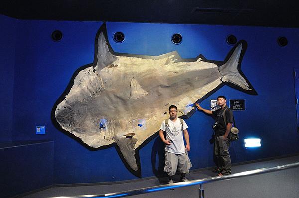 大白鯊的皮!!